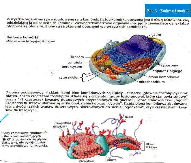 Budowa-komórki-na-www